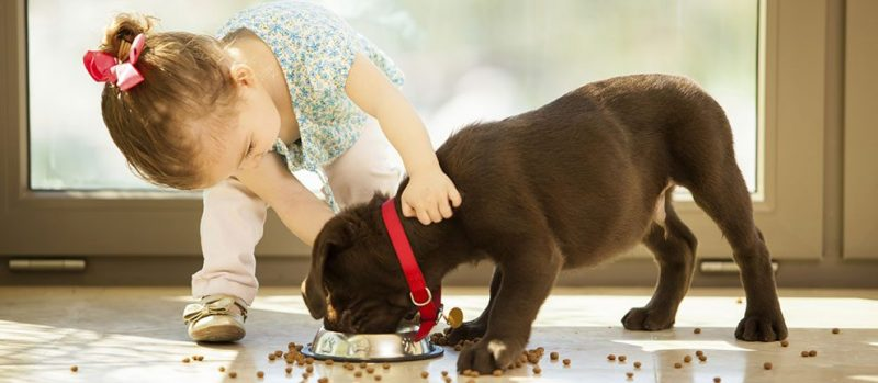 https://www.lovingparents.in/kids/kids-1-3-years/how-to-teach-children-to-be-safe-around-pets/