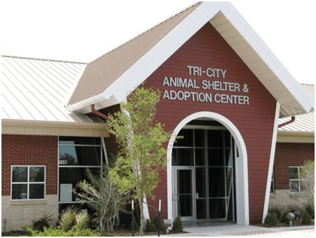 animal shelter home