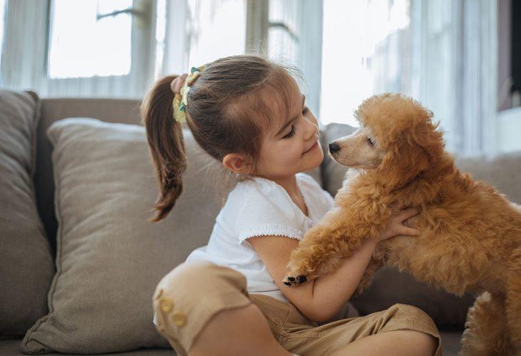 pets-safety