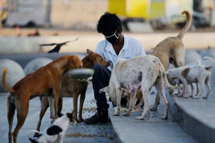 Feed A Stray Dog